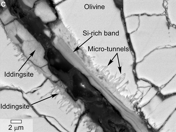 En esta imagen de microscopía electrónica se observan los microtúneles. NASA.