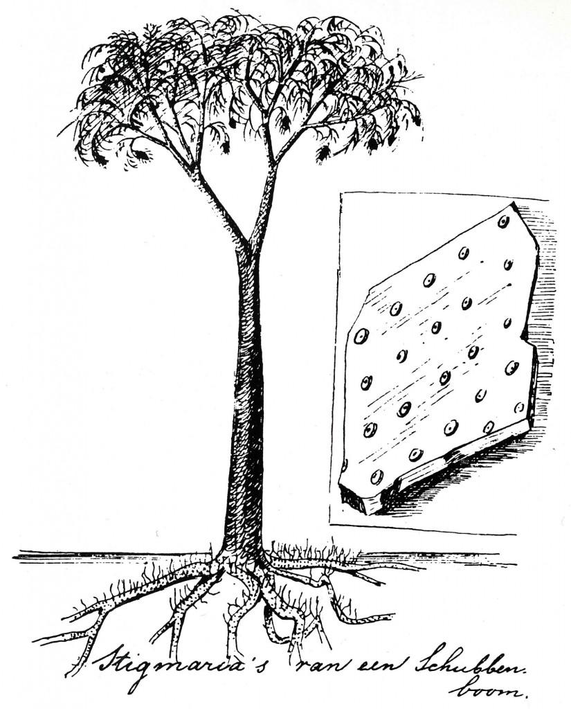 Reconstrucción de principios del siglo XX de como podría haber sido un Lepidodendron.