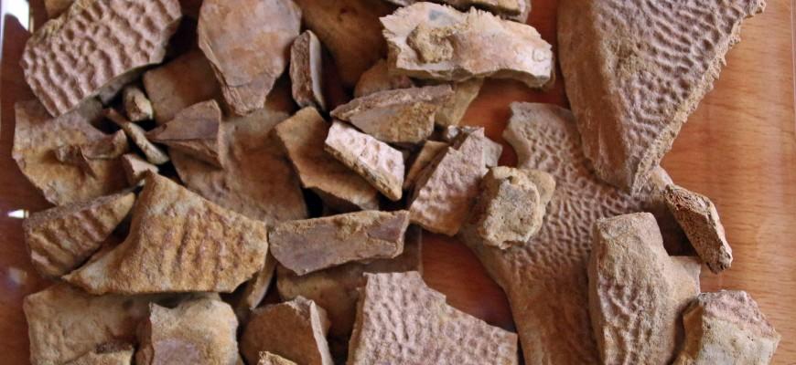 Un auténtico puzzle formado por piezas del caparazon inferior de una tortuga del género Trionyx.