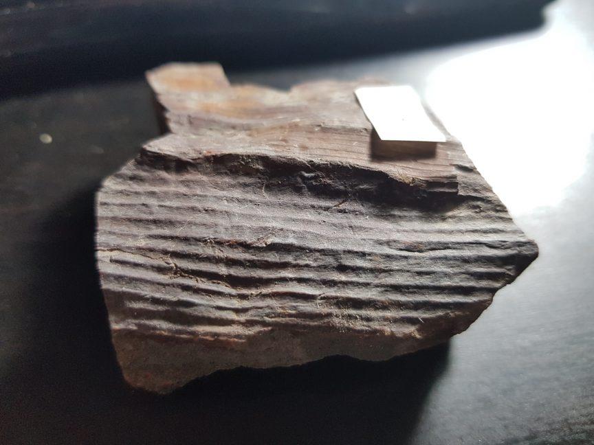 En lo que hoy es la península Ibérica, existen grandes cuencas carboníferas, como la que dio lugar a este fósil de Calamitaceae.