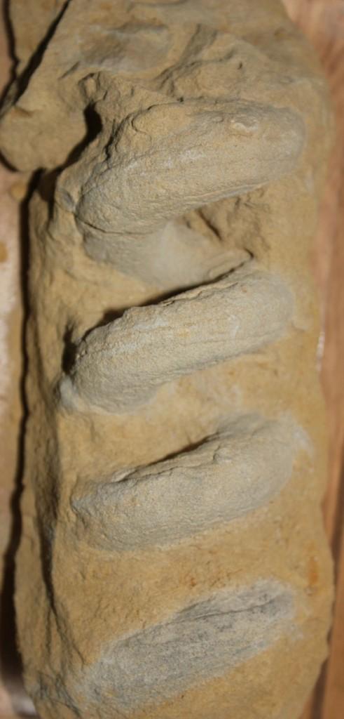 Imagen de un Gyrolithes del Plioceno
